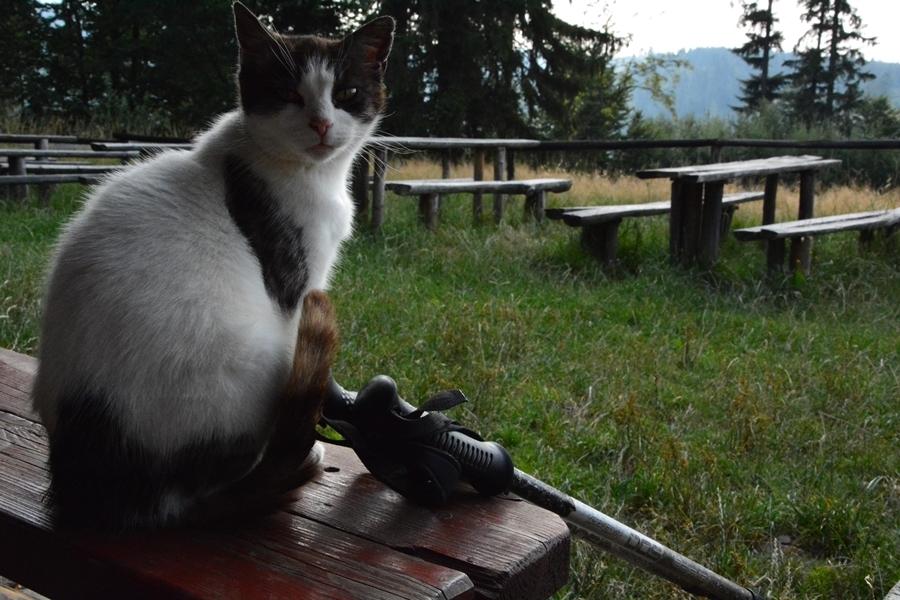 poranek z kotami