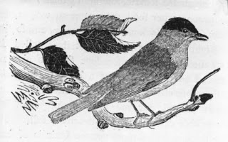 W muzeum biograficznym – ptaszki Thomasa BEWICK 'a