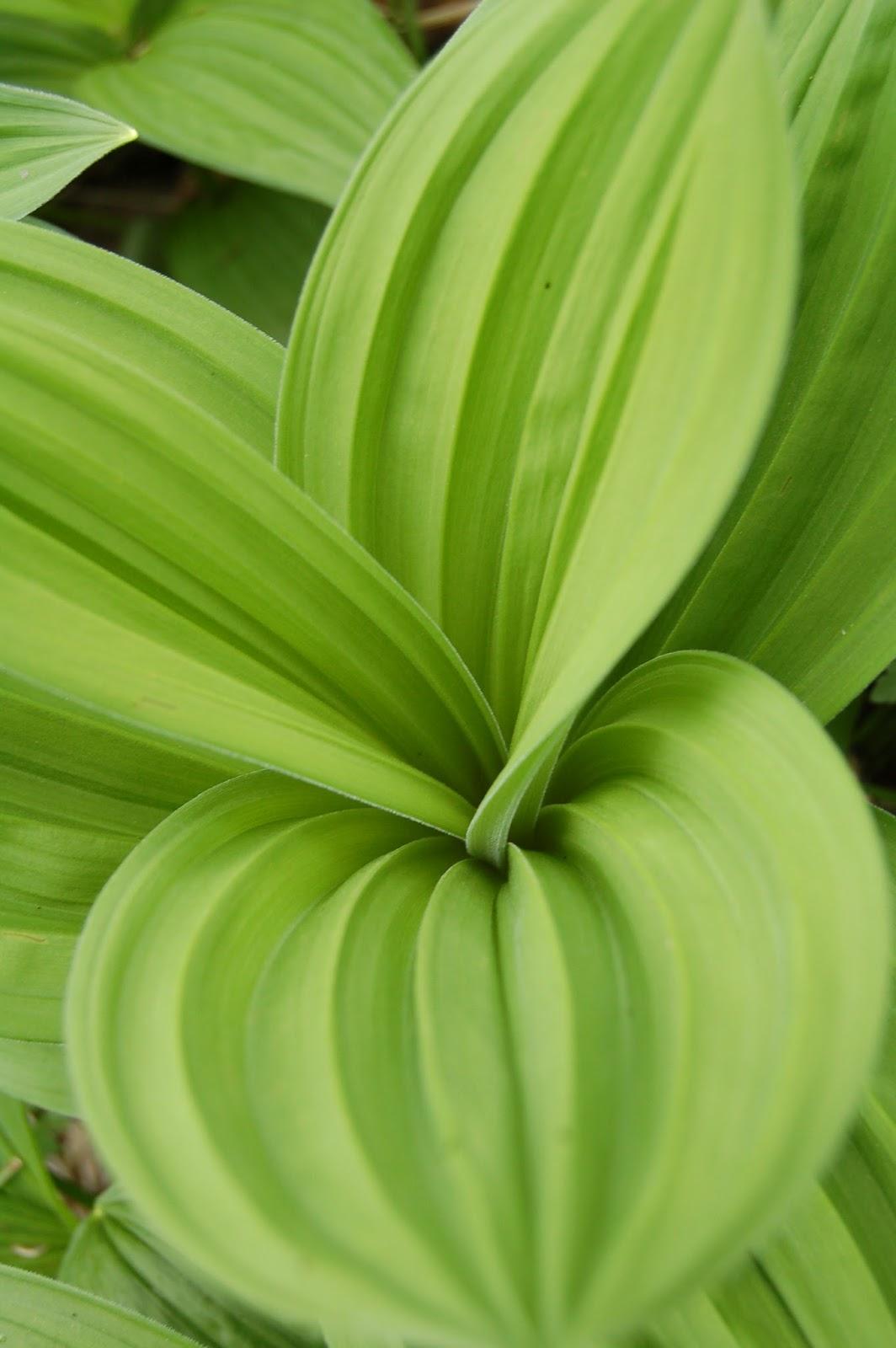 Bieszczady, roślinność