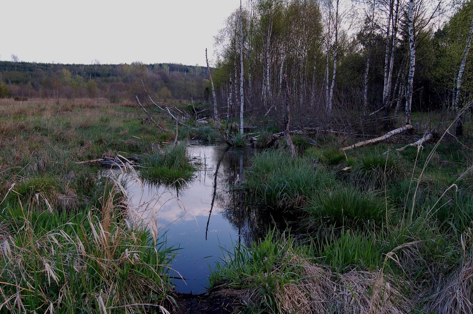 torfowisko wysokie, Tarnawa Wyżna