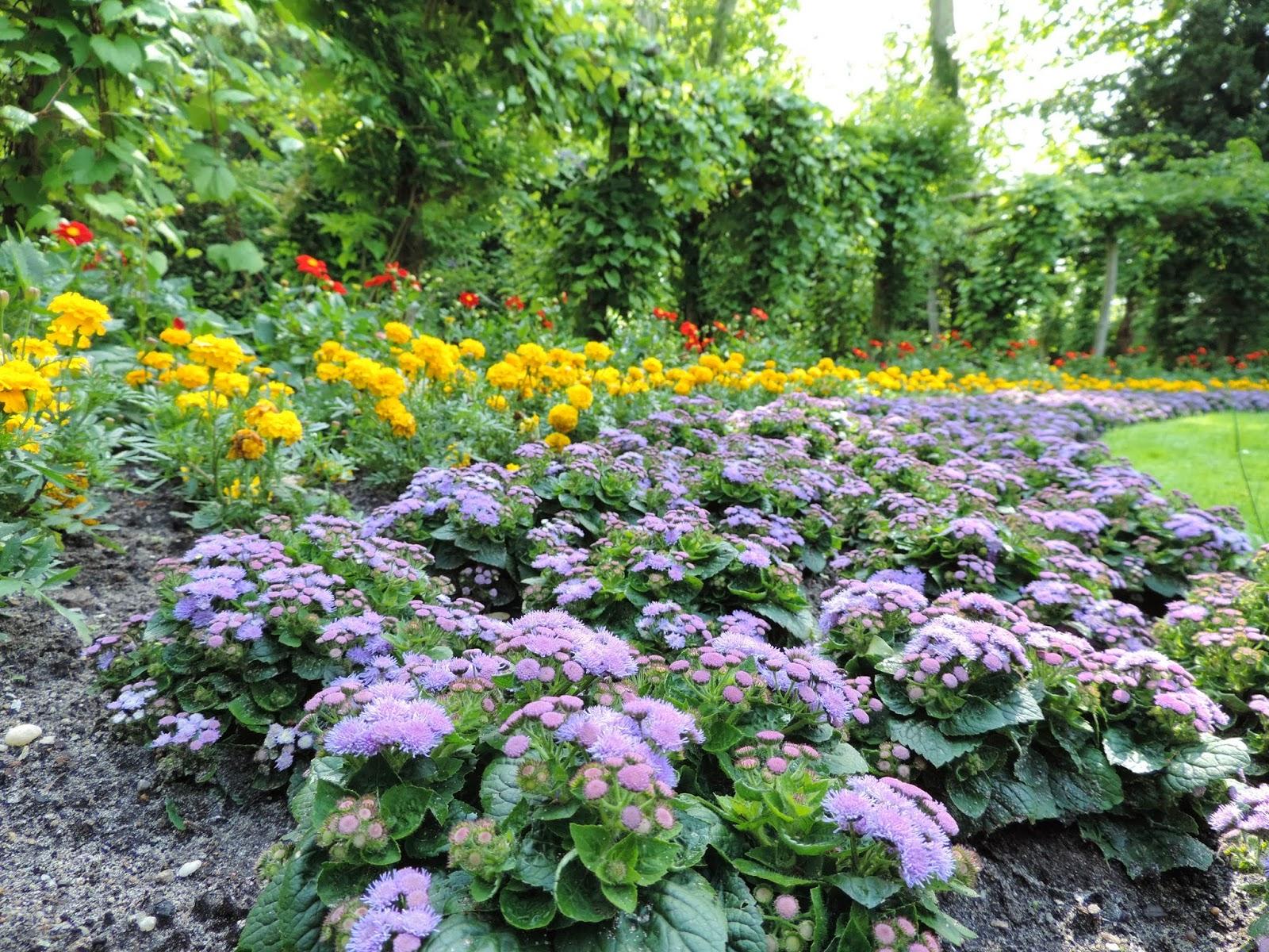 ogród, Pawia Wyspa, Berlin