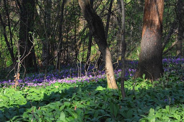 Rezerwat Kopce w Cieszynie