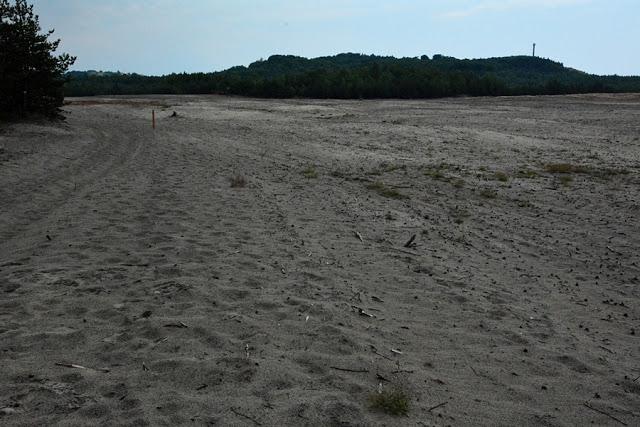 Spacer po piaskach i murawach Pustyni Błędowskiej .. Pustynia Błędowska
