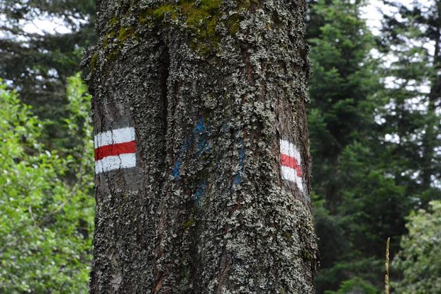oznakowanie szlaków w Polsce