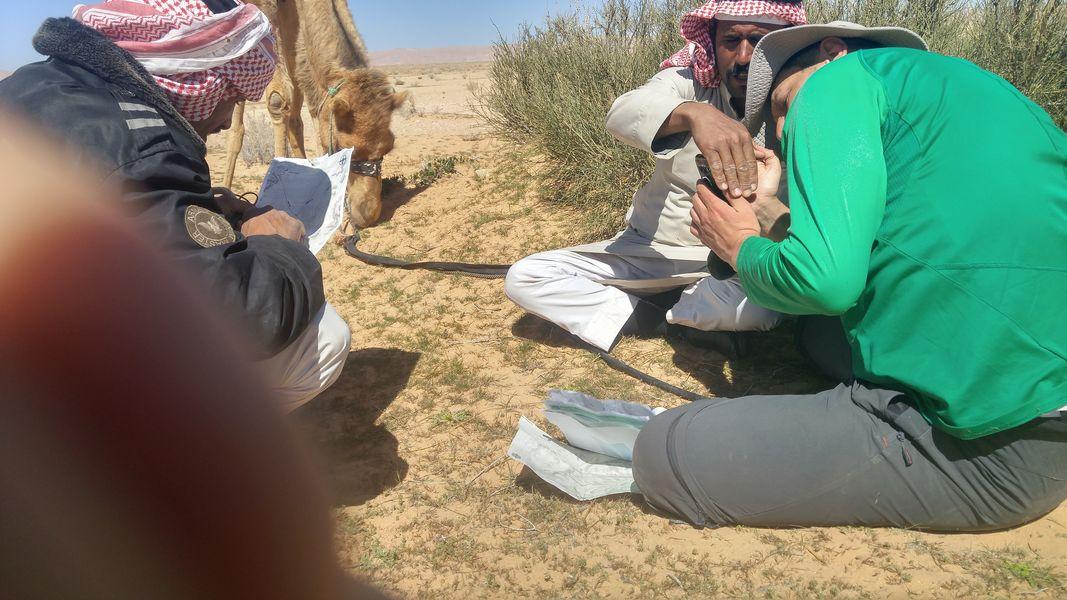 Beduini, Jordania