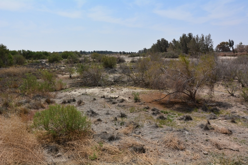 rezerwat Azrak Jordania oaza
