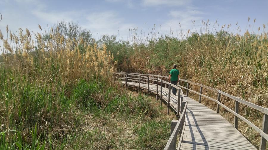rezerwat przyrody RSCN Jordania