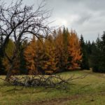 Mogielica – królowa Beskidu Wyspowego w Koronie Gór Polski