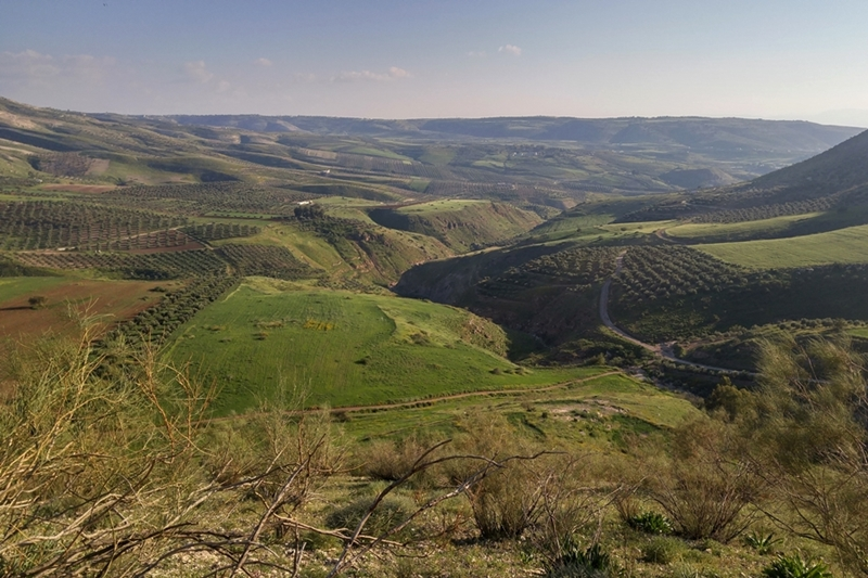 Szlak Jordański, okolice Umm Qais, Jordania