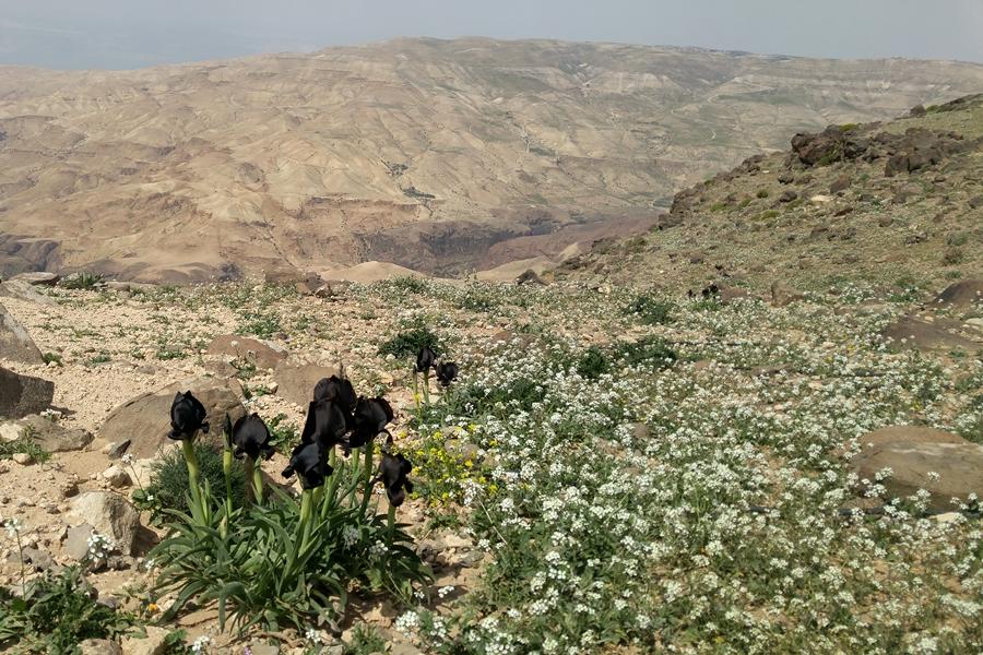 Wadi Hidan, Jordania, Szlak Jordański
