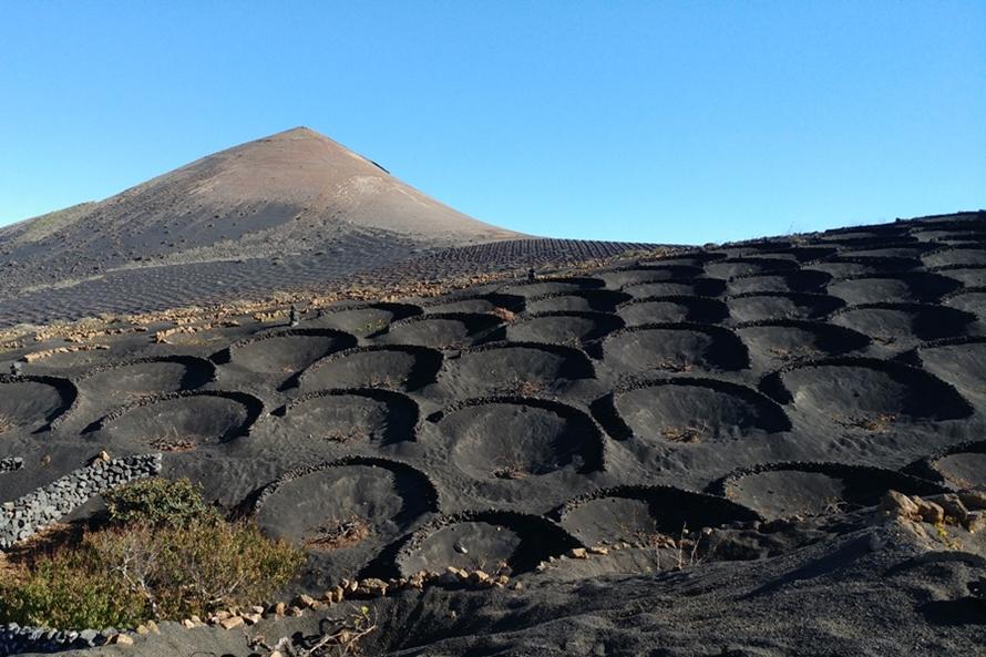 Wino z wulkanu i krem z aloesu pamiątki z Lanzarote