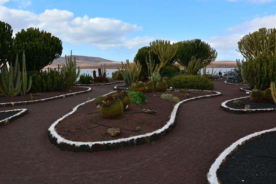 Jardin de Cactus, Fuerteventura