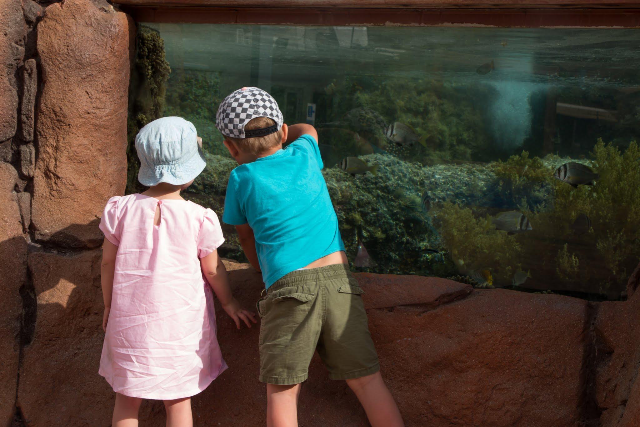 Ejlat z dziećmi, oceanarium