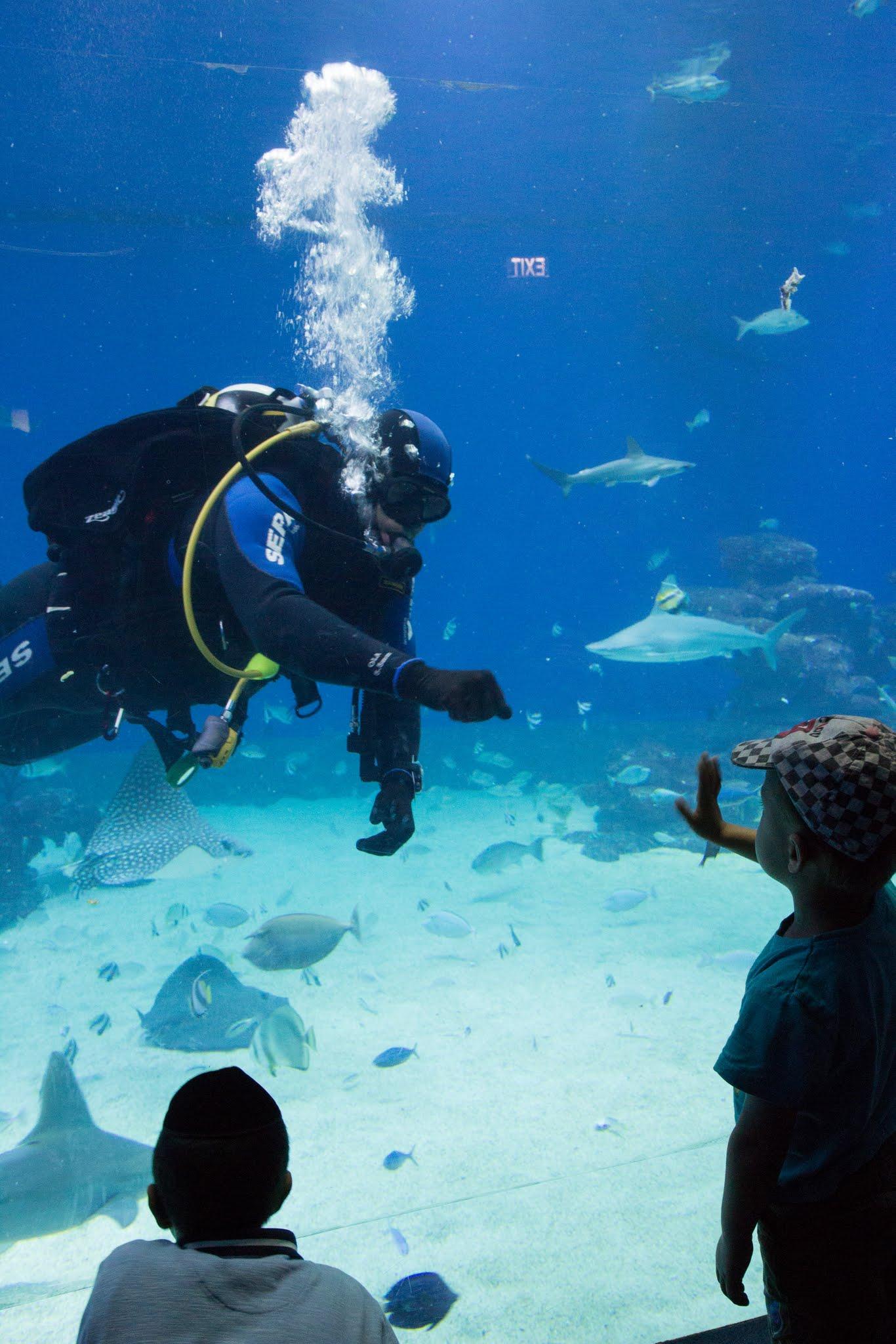 atrakcje Ejlatu, oceanarium