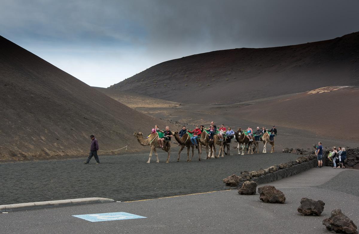 Lanzarote, Timanfaya Park, Ruta en Dromedario - wielbłądy