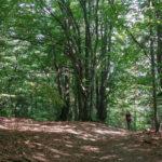 Czupel - największy czubek Beskidu Małego w Koronie Gór Polski
