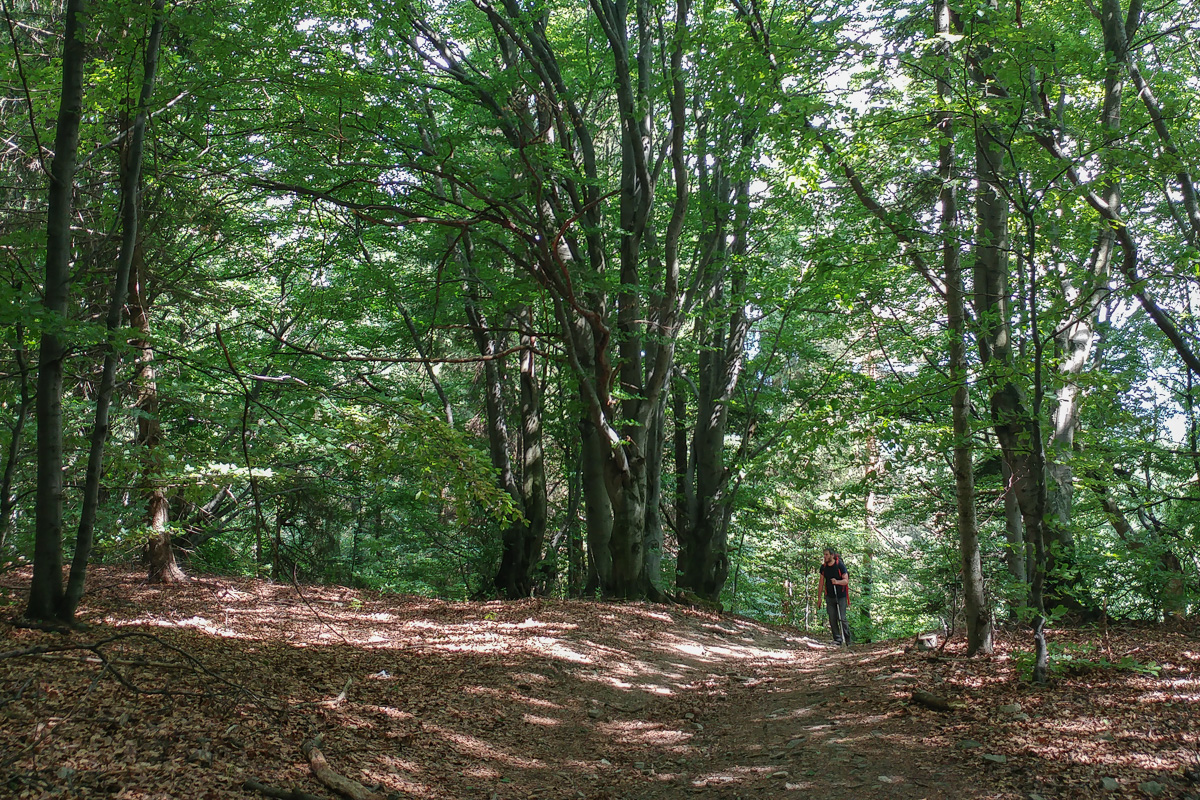 Czupel – największy czubek Beskidu Małego w Koronie Gór Polski
