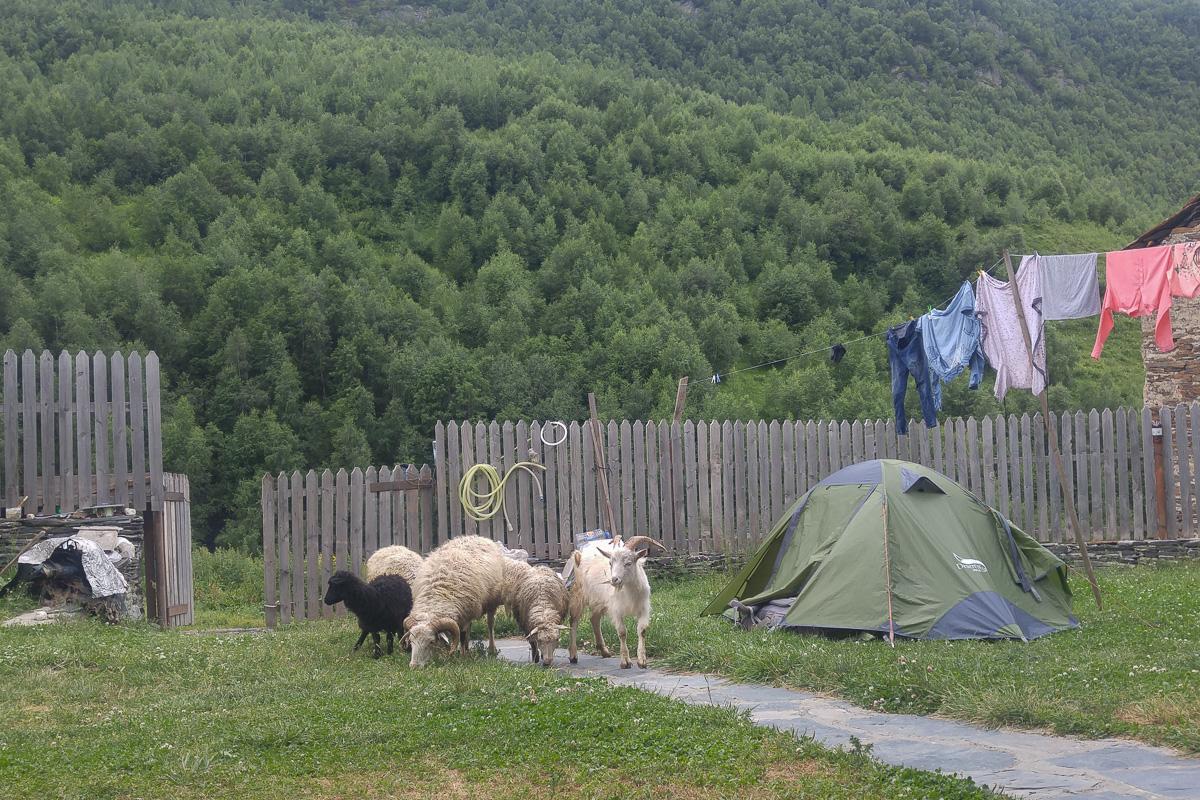 pole namiotowe po swanecku