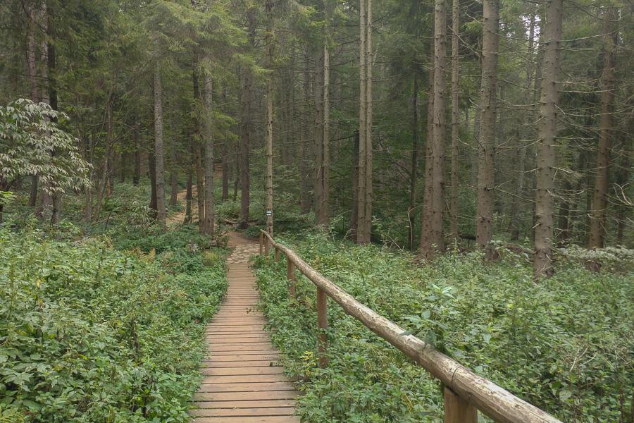 szlak niebieski na Tarnicę z Wołosatego, las