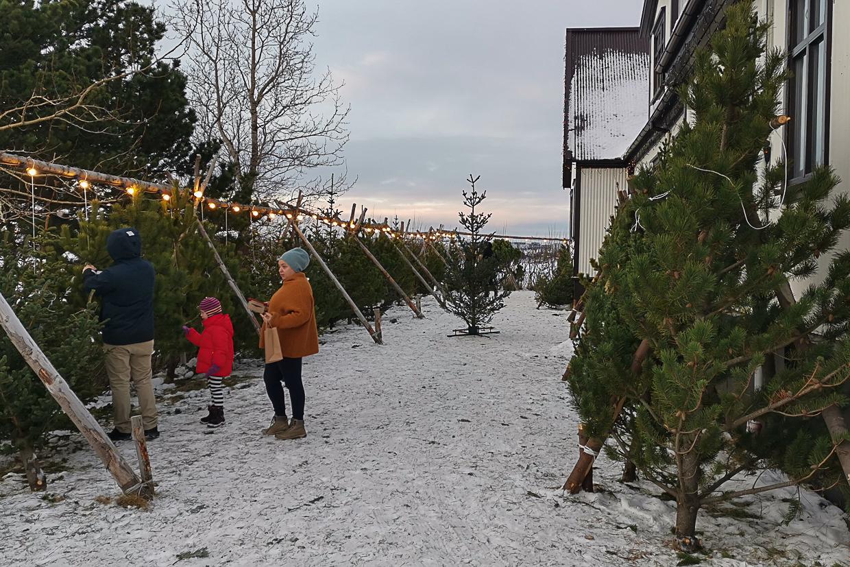 jarmark bożonarodzeniowy w Heiðmörk, Islandia