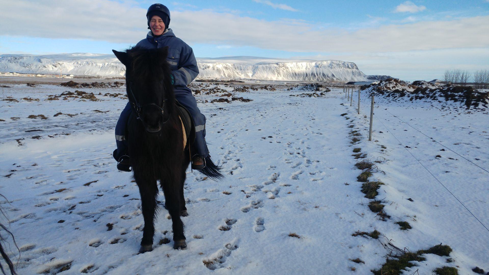koń islandzki,